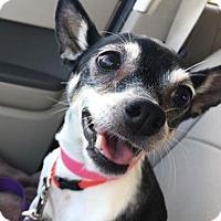 Adopt A Pet :: Pinky - Suwanee, GA