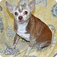 Adopt A Pet :: Nemo - Port Washington, NY