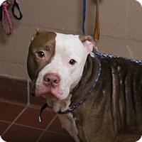 Adopt A Pet :: King - Daytona Beach, FL