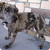 Adopt A Pet :: Betsy - Artesia, NM