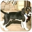 Photo 2 - Beagle Puppy for adoption in cedar grove, Indiana - Pup-E