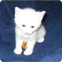 Adopt A Pet :: Logan - Richmond, VA