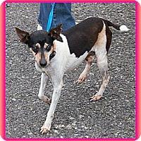 Adopt A Pet :: Mary Kay (Sweet Girl- $150 off - Staunton, VA