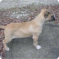 Adopt A Pet :: Starla - Glastonbury, CT