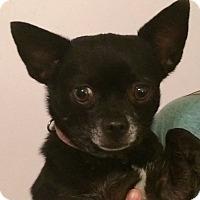 Adopt A Pet :: Sally - Orlando, FL