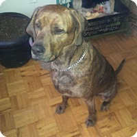 Adopt A Pet :: Nikki - Northumberland, ON