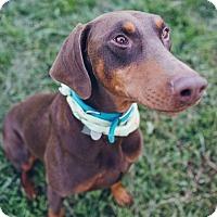 Adopt A Pet :: Jacob - New Richmond, OH