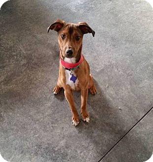 Whippet Mix Dog for adoption in Urbana, Ohio - Fifty