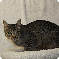 Adopt A Pet :: Claudia - Shelby, MI