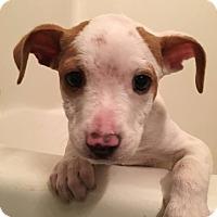 Adopt A Pet :: Jared - Huntsville, AL