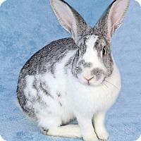 Adopt A Pet :: Norman - Encinitas, CA