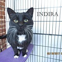 Adopt A Pet :: Indira - Houlton, ME
