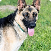 Adopt A Pet :: Freya - Walnut Creek, CA