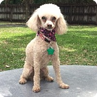 Adopt A Pet :: KAILI - Melbourne, FL
