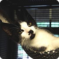 Adopt A Pet :: Kipp - Tomball, TX