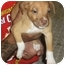 Photo 2 - American Pit Bull Terrier Mix Dog for adoption in Killen, Alabama - Annabell (aka Crystal)