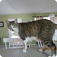Adopt A Pet :: Billy - Bunnell, FL