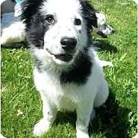 Adopt A Pet :: LUCAS - Gilbert, AZ