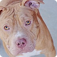 Adopt A Pet :: Prince - Reisterstown, MD