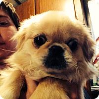 Adopt A Pet :: Jon Jon - Hazard, KY
