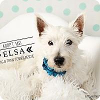 Adopt A Pet :: Elsa - Omaha, NE
