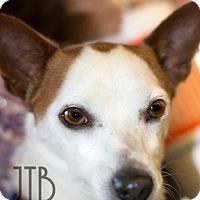 Adopt A Pet :: GUS - Terra Ceia, FL