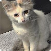 Adopt A Pet :: Magnolia - Chattanooga, TN