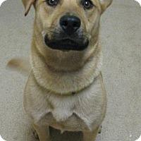 Adopt A Pet :: Danny - Gary, IN