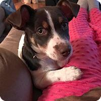 Adopt A Pet :: Kane - Huntsville, AL