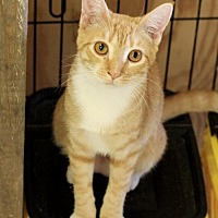 Adopt A Pet :: Pita - Hammond, LA