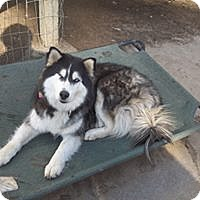 Adopt A Pet :: Zoey - Pacific Grove, CA
