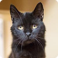 Adopt A Pet :: Allsort - Toronto, ON