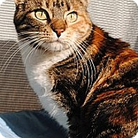 Adopt A Pet :: Shelby - Palmdale, CA