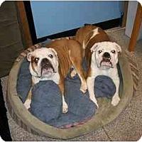 Adopt A Pet :: Bubbles*adoption pending* - Gilbert, AZ