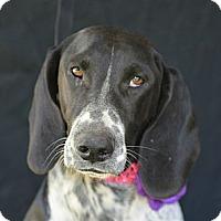 Adopt A Pet :: Ruby - Plano, TX