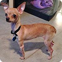 Adopt A Pet :: JUNEBUG - AUSTIN, TX