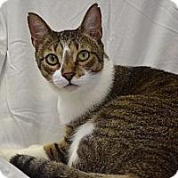 Adopt A Pet :: Romeo - Deerfield Beach, FL