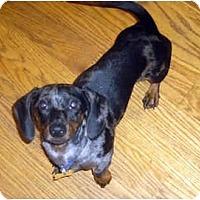 Adopt A Pet :: Skeeter - San Jose, CA
