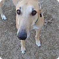 Adopt A Pet :: Apollo (Summer Shade) - Chagrin Falls, OH