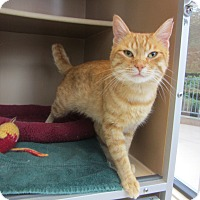 Adopt A Pet :: Squire - Kingston, WA