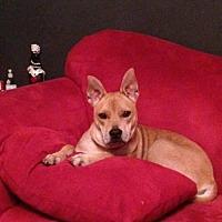 Labrador Retriever Mix Dog for adoption in New York, New York - Ella