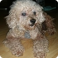 Adopt A Pet :: Ricky - courtesy - Redondo Beach, CA