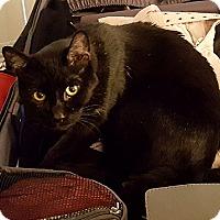 Adopt A Pet :: Walter - Vista, CA