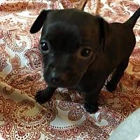 Adopt A Pet :: Michelle - greenville, SC