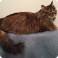 Adopt A Pet :: Liza - Merrifield, VA