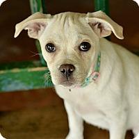 Adopt A Pet :: Berry - San Antonio, TX