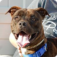 Adopt A Pet :: Guinness - Long Beach, NY