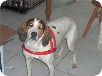 Hound (Unknown Type) Mix Dog for adoption in Clayton, Ohio - Dutches