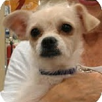 Adopt A Pet :: Cloud - Phoenix, AZ