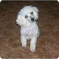 Adopt A Pet :: Lance - Chandler, IN